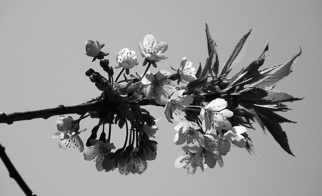 finally some spring petals 01