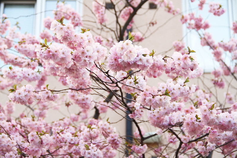 våren.