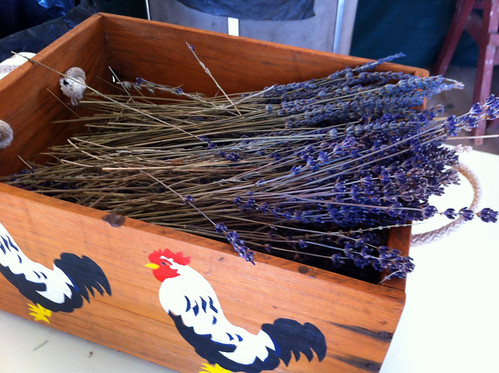 Balingup Lavender Farm - Lavender