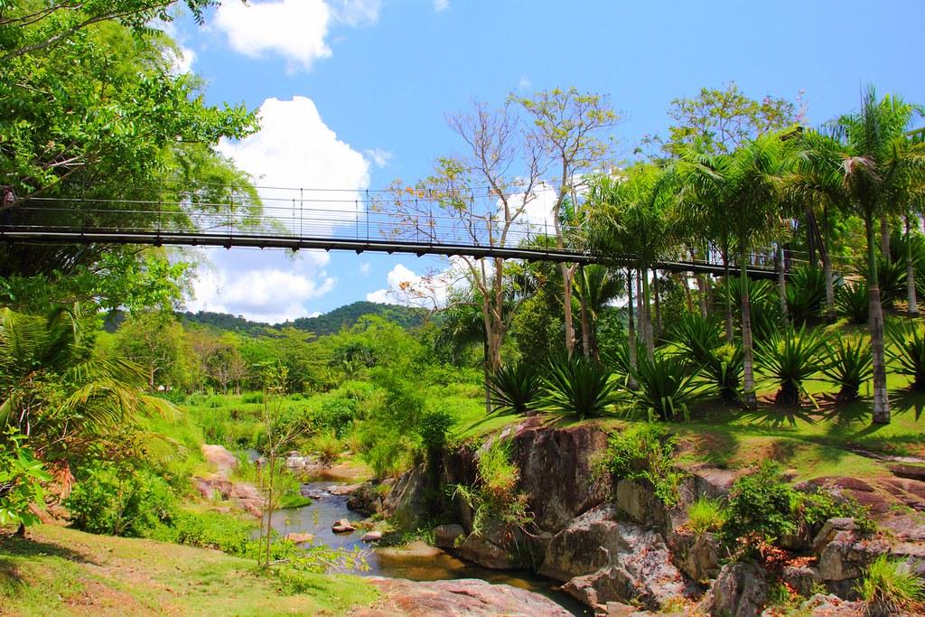 Caguas jard n bot nico y cultural de caguas page 4 for Actividad de perros en el jardin botanico de caguas