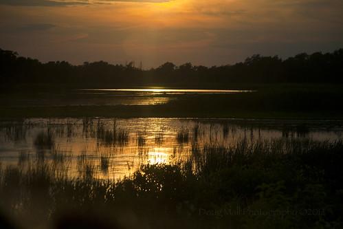 trip sunset vacation nature scenery delaware costal birdsanctuary bombayhook nikond5000 dougmall