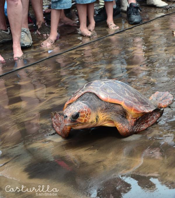 Suelta de tortugas tenerife