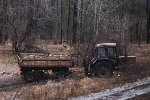 Tractor and trailer out collecting fire wood in Russia