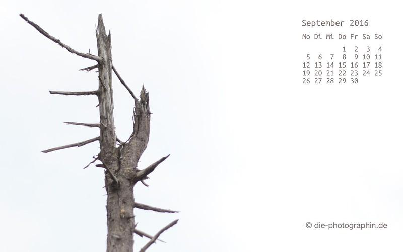 toterBaum_september_kalender_die-photographin