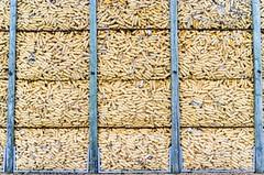 Corn fields d'Alsace