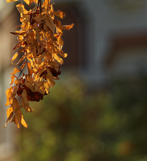 Une tranche d'automne - A slice of fall