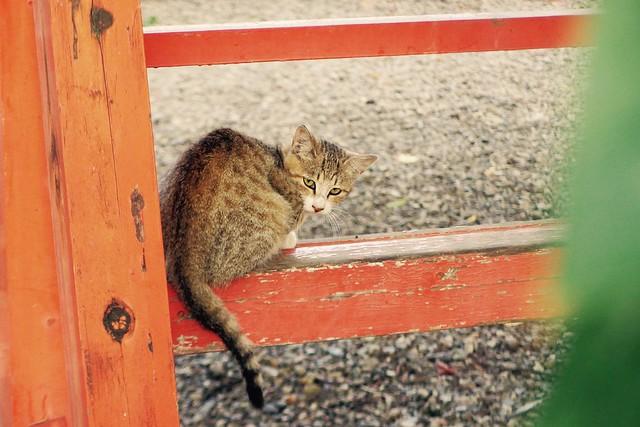 Today's Cat@2016-10-12