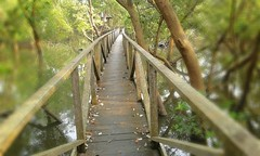 prasetyoikwan posted a photo:	Mangrove Bridge at Agrowisata Margomulyo Balikpapan