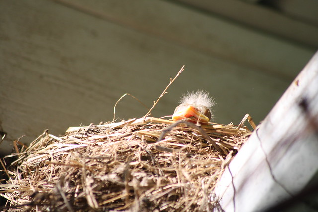 baby robin gets some sun