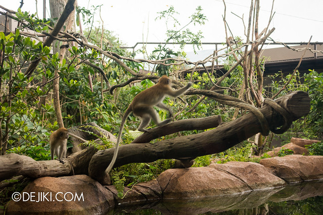 River Safari - Macaque Habitat