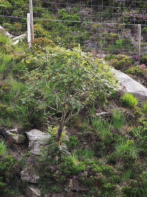 one of those very rare trees?