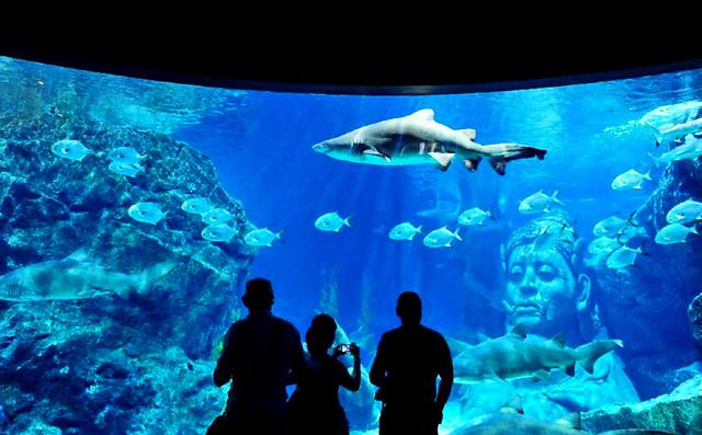 曼谷暹罗海洋世界 SEA LIFE BANGKOK OCEAN WORLD
