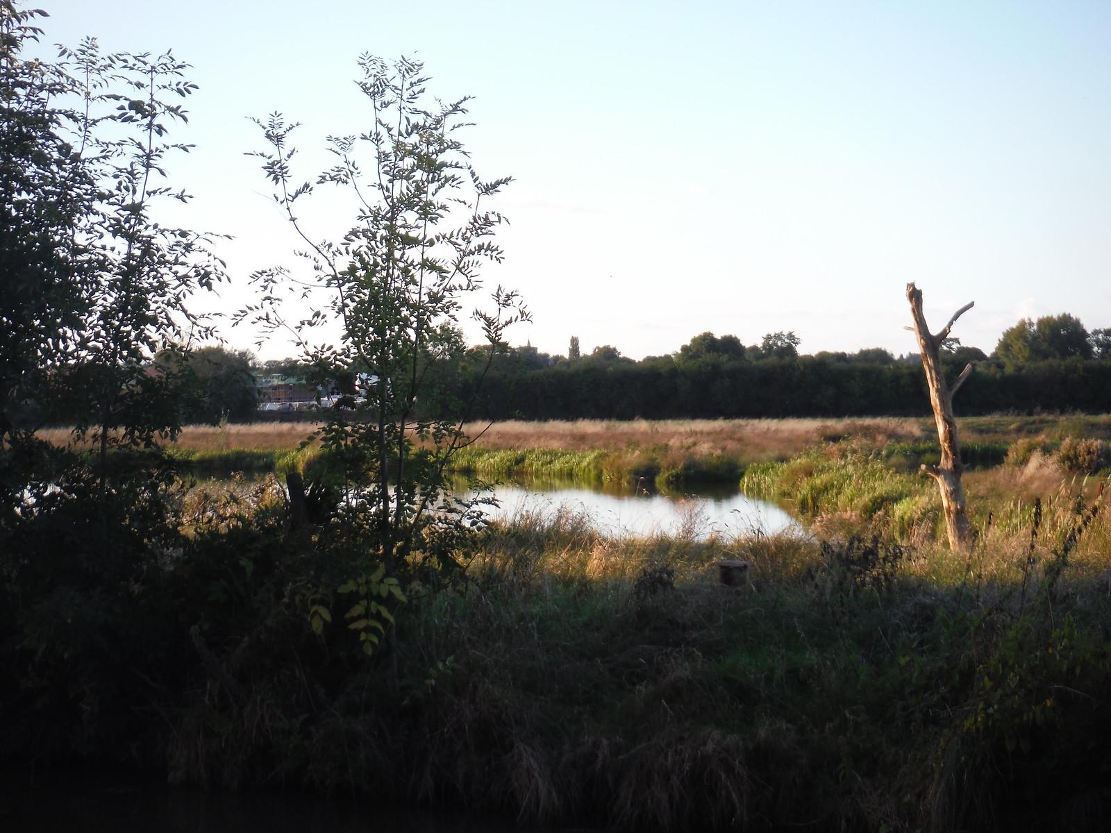 Canalside Meadows SWC Walk 194 Aylesbury Vale Parkway to Aylesbury