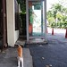 A cat and a telephone booth