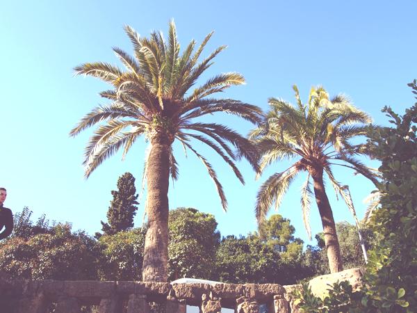 1 palm trees