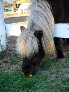 Pony at Sunnybrook Park