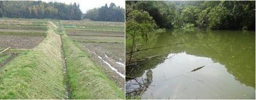 草溝及具樹林的土岸埤塘