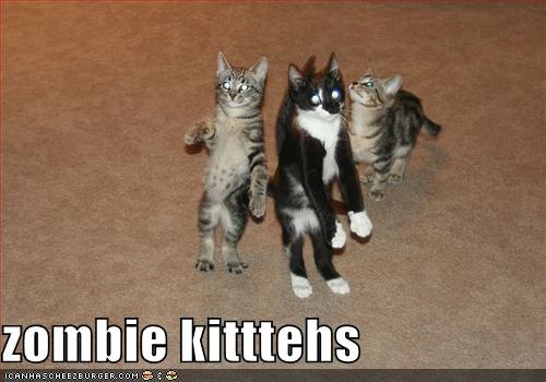 funny-pictures-these-cats-are-zombies