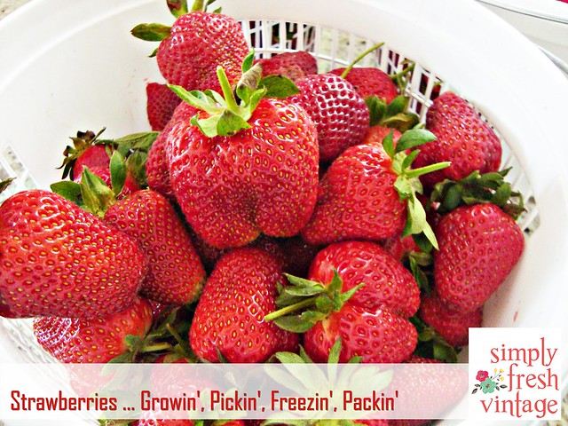 Strawberries ... Growin', Pickin', Freezin', Packin'