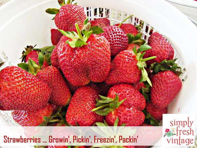 Strawberries ... Growin', Pickin', Freezin', Packin'