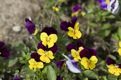 june flowers-4796-7
