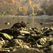 srbija: Drina River