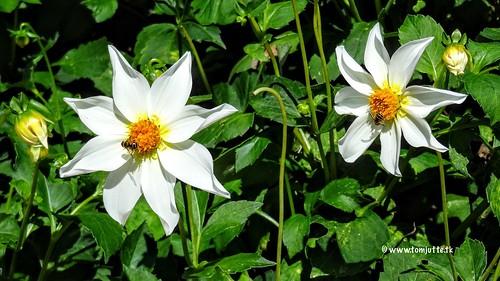 Flowers at the Botanical Gardens in Utrecht, Netherlands - 4476