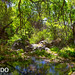 Cattail Falls trail, Big Bend - <span>This little oasis is in the middle of the dessert!!!!</span>