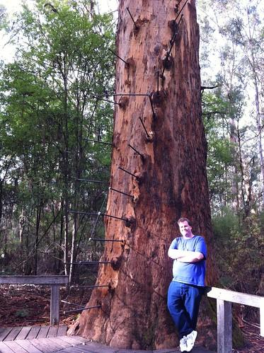 Pemberton - Gloucester Tree - Mike 'n Tree