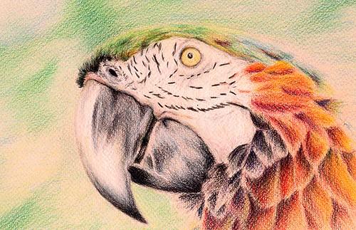 finushed parrot