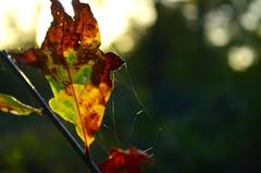 feuilles - Photo of Bannost-Villegagnon