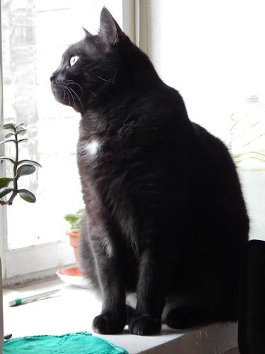 Кот Муся сидит на подоконнике и смотрит в окно