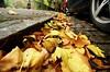 Kelvin Way - Galsgow - Autumn Leaves - 151016