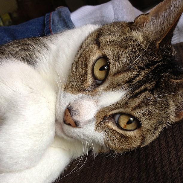 #cats #catsofinstagram #furbaby