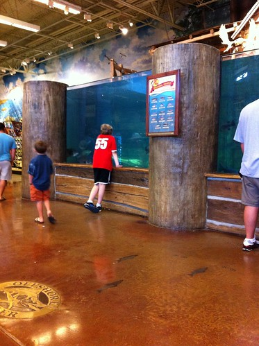 Feeding Time at Bass Pro Shop in Atlanta