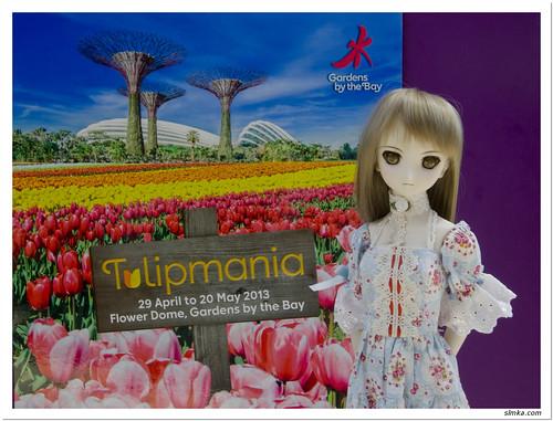 Tulipmania - Singapore