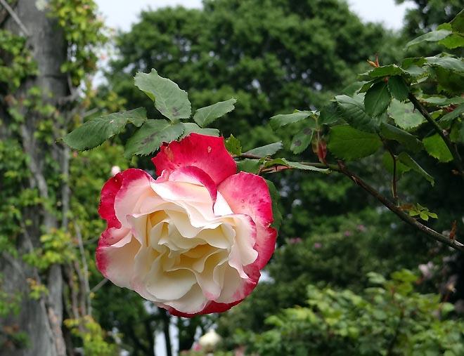 Hearst Castle gardens 08