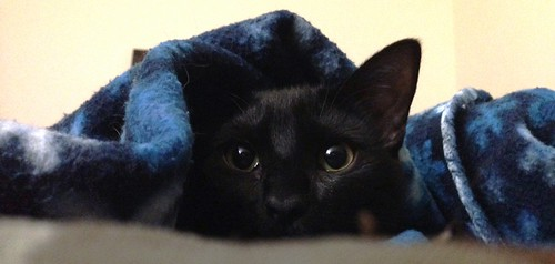 Martha Kitten peeking out from under the sheets.