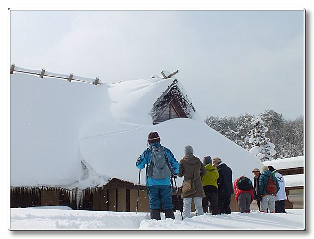 山麓庵の茅葺き屋根を移動したテンの足跡を観察する.