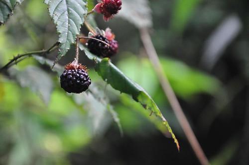 不知名的植物