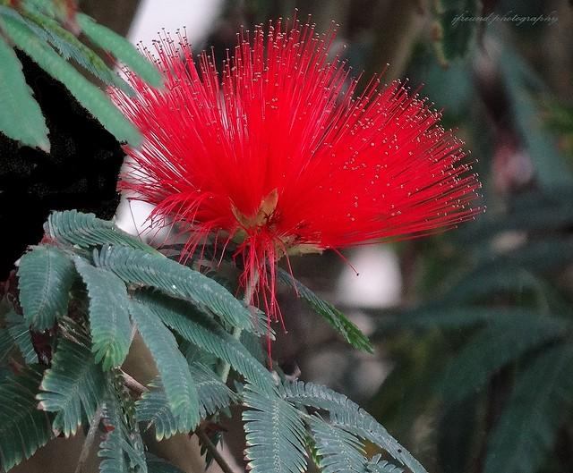 More flowers of Israel