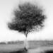 Multi-Exposure: Solitary Tree by holtelars