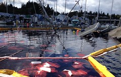 Oil spill boom and pads in place