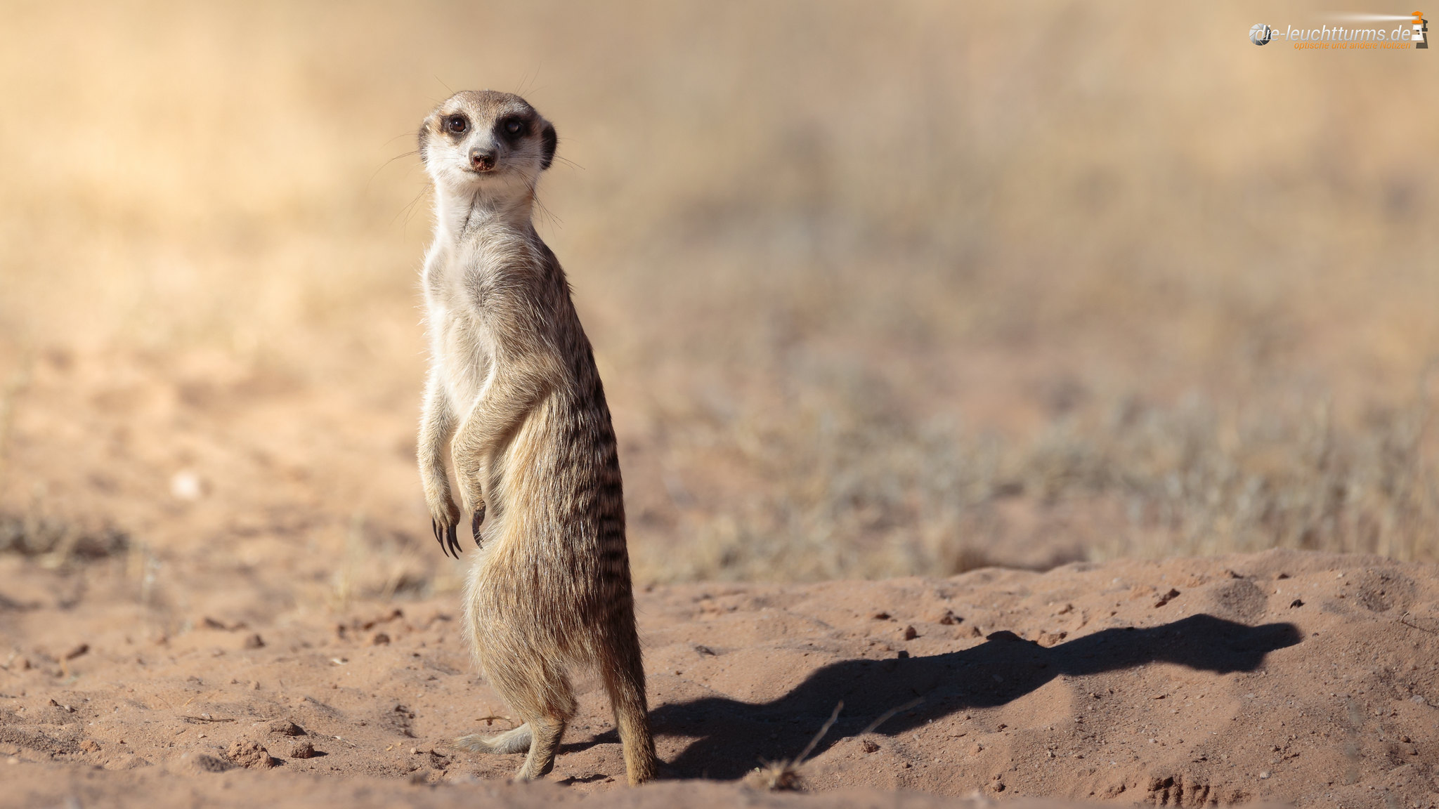 Guardian of the Kgalagadi