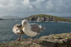 Ireland: Dingle Peninsula
