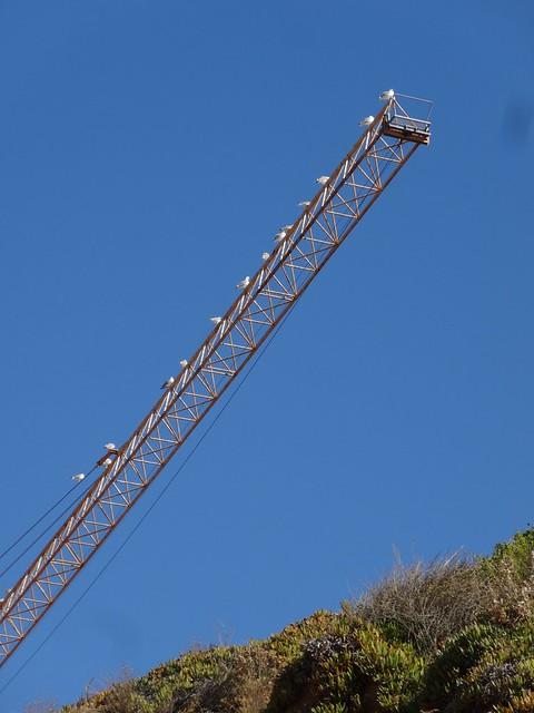Seagulls on a crane, Sony DSC-HX20V