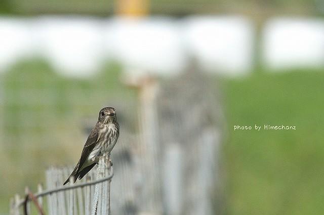 凛々しい鳥も多かった