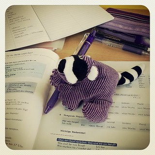 Raccoon busy studying. I need a name for this guy. :)