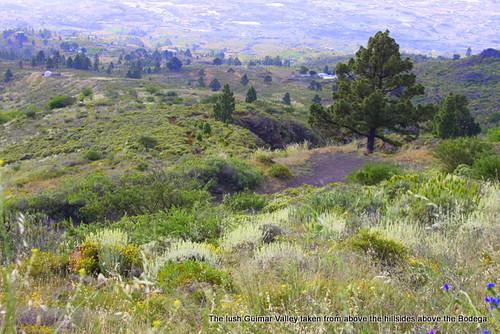 Bodega Comarca Valle de Güimar in Tenerife