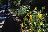 境内片隅の花々